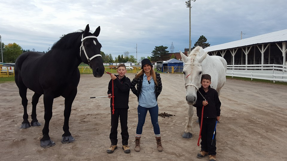 percheron; pana-len percherons; draft horse; heavy horse; greg bourbonnais; paul bourbonnais; gelding; geldings; heavy horses; north american six horse hitch class series; metcalfe fair; sarah freemark; ctv