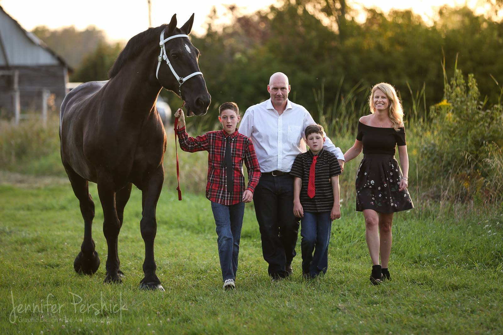 percheron; pana-len percherons; draft horse; heavy horse; greg bourbonnais; paul bourbonnais; gelding; geldings; heavy horses; north american six horse hitch class series