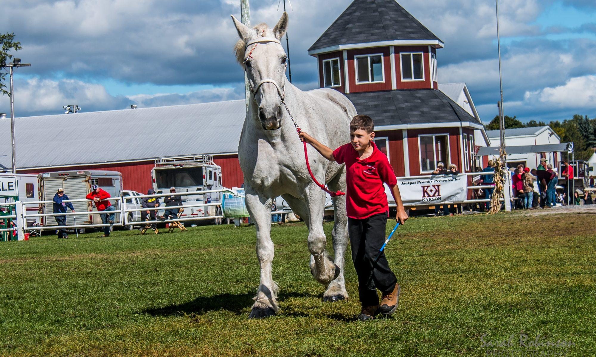 percheron; pana-len percherons; draft horse; heavy horse; greg bourbonnais; paul bourbonnais; gelding; geldings; heavy horses; bradley bourbonnais